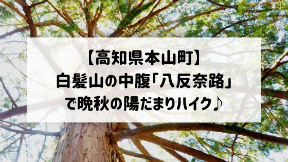 【高知県本山町】白髪山の中腹「八反奈路」で晩秋の陽だまりハイク♪