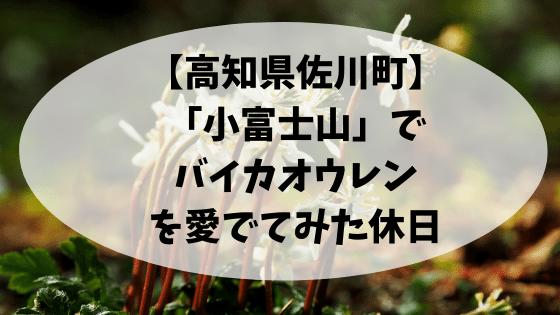 【高知県佐川町】「小富士山」でバイカオウレンを愛でてみた休日