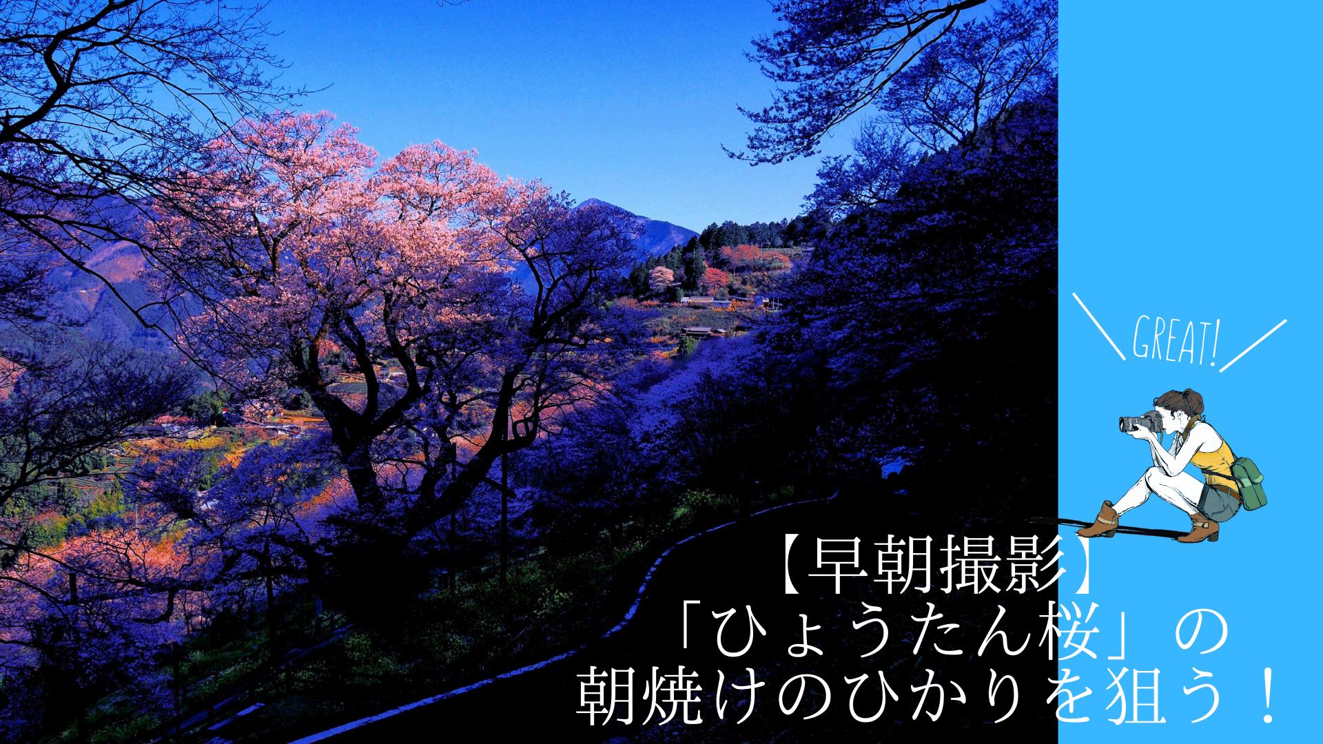 【早朝撮影】「ひょうたん桜」の朝焼けのひかりを狙う!