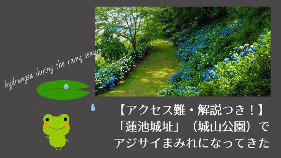 【アクセス難・解説つき!】「蓮池城址」(城山公園)で紫陽花まみれになってきた