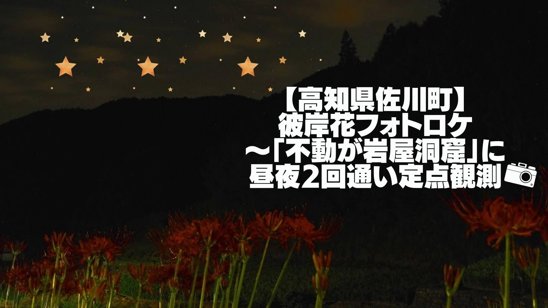 【高知県佐川町】彼岸花フォトロケ〜「不動が岩屋洞窟」に昼夜2回通い定点観測