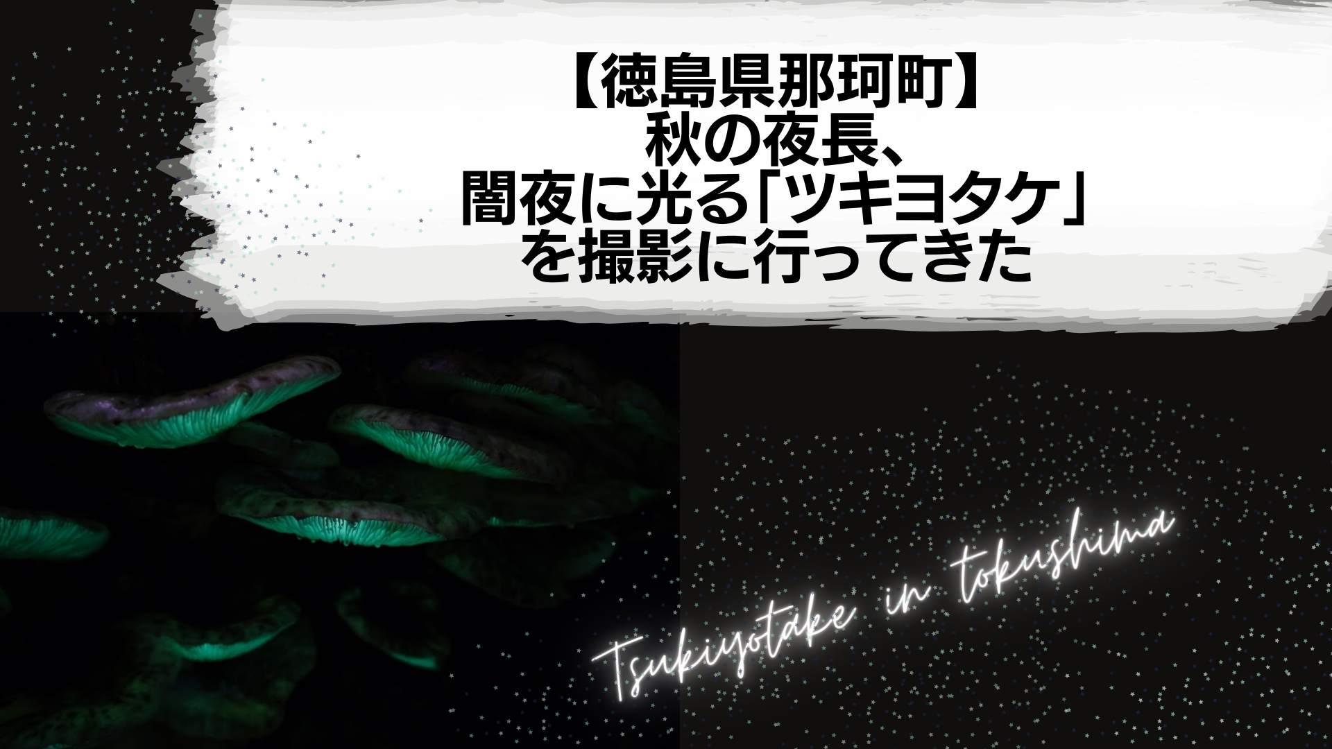 【徳島県那珂町】 秋の夜長、 闇夜に光る「ツキヨタケ」 を撮影に行ってきた