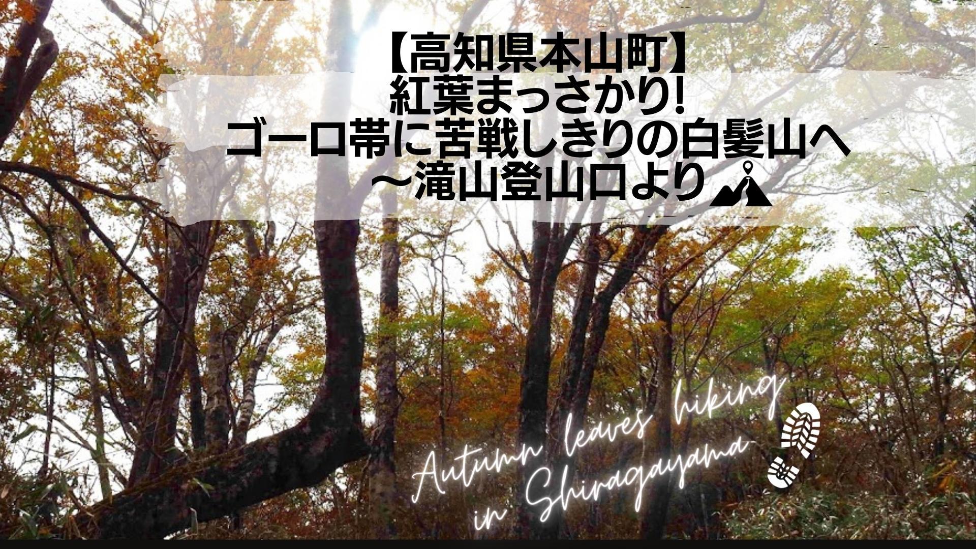 【高知県本山町】 紅葉まっさかり! ゴーロ帯に苦戦しきりの白髪山へ 〜滝山登山口より