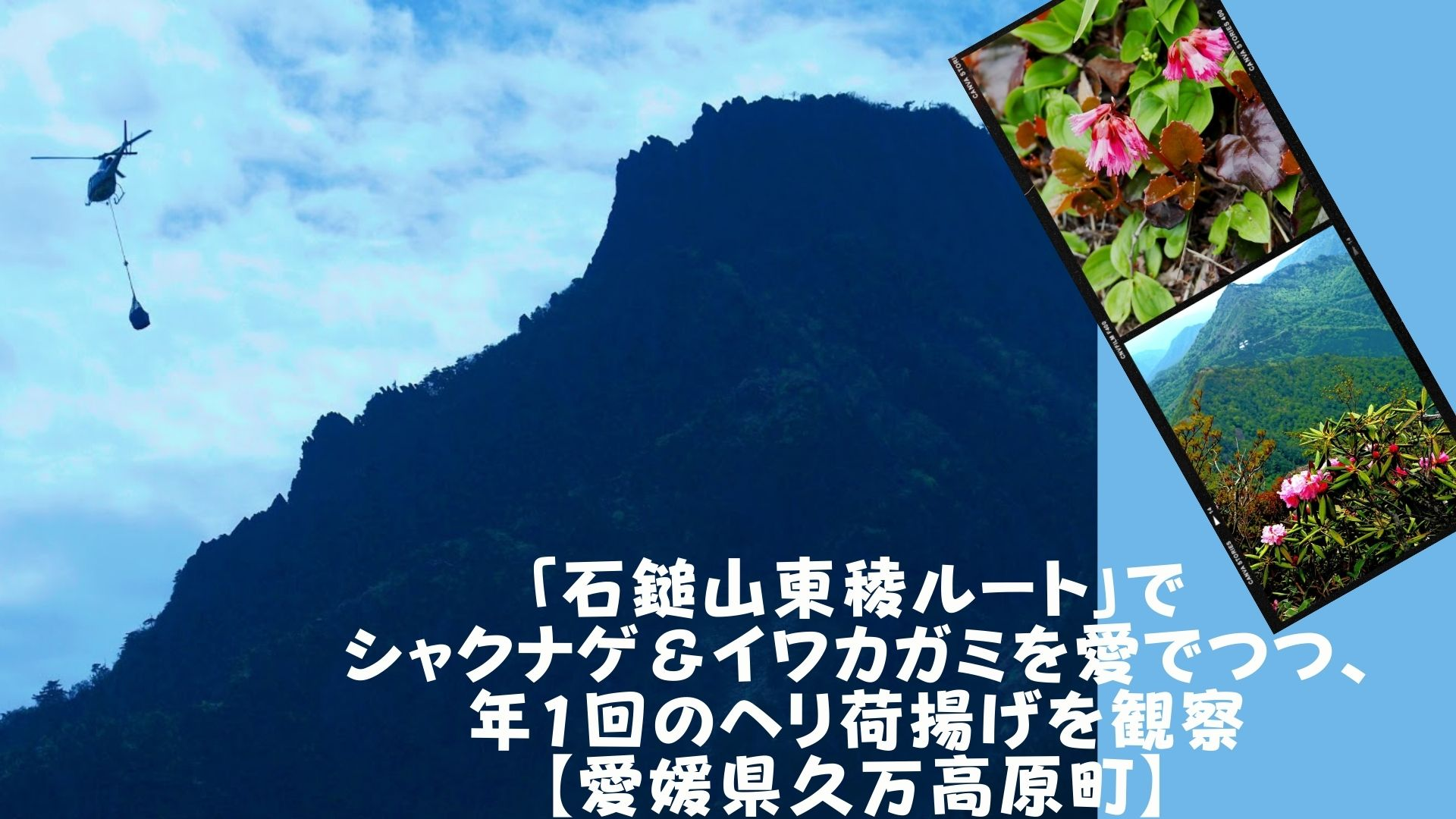 「石鎚山東稜ルート」でシャクナゲ&イワカガミを愛でつつ、年1回のヘリ荷揚げを観察【愛媛県久万高原町】